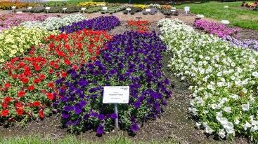 CSU Annual Trail Garden-0215 blog