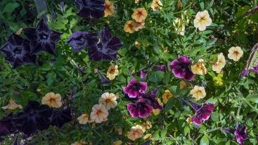 CSU Annual Trail Garden-0217 blog