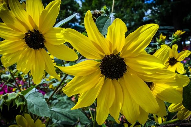 CSU Annual Trail Garden-0219 blog