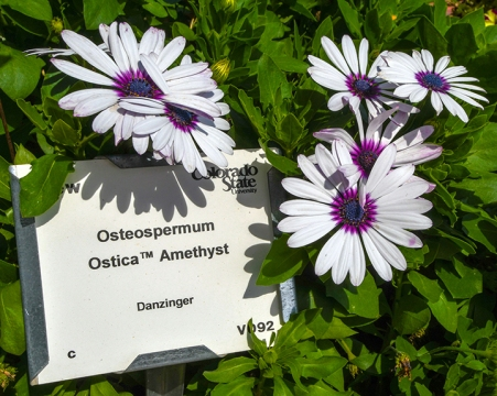 CSU Annual Trail Garden-0227 blog