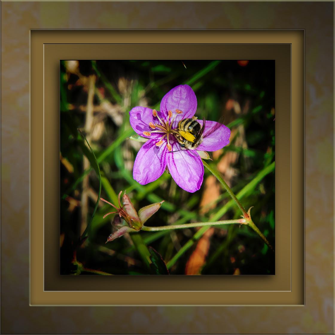 Richardson's geranium-3152 blog