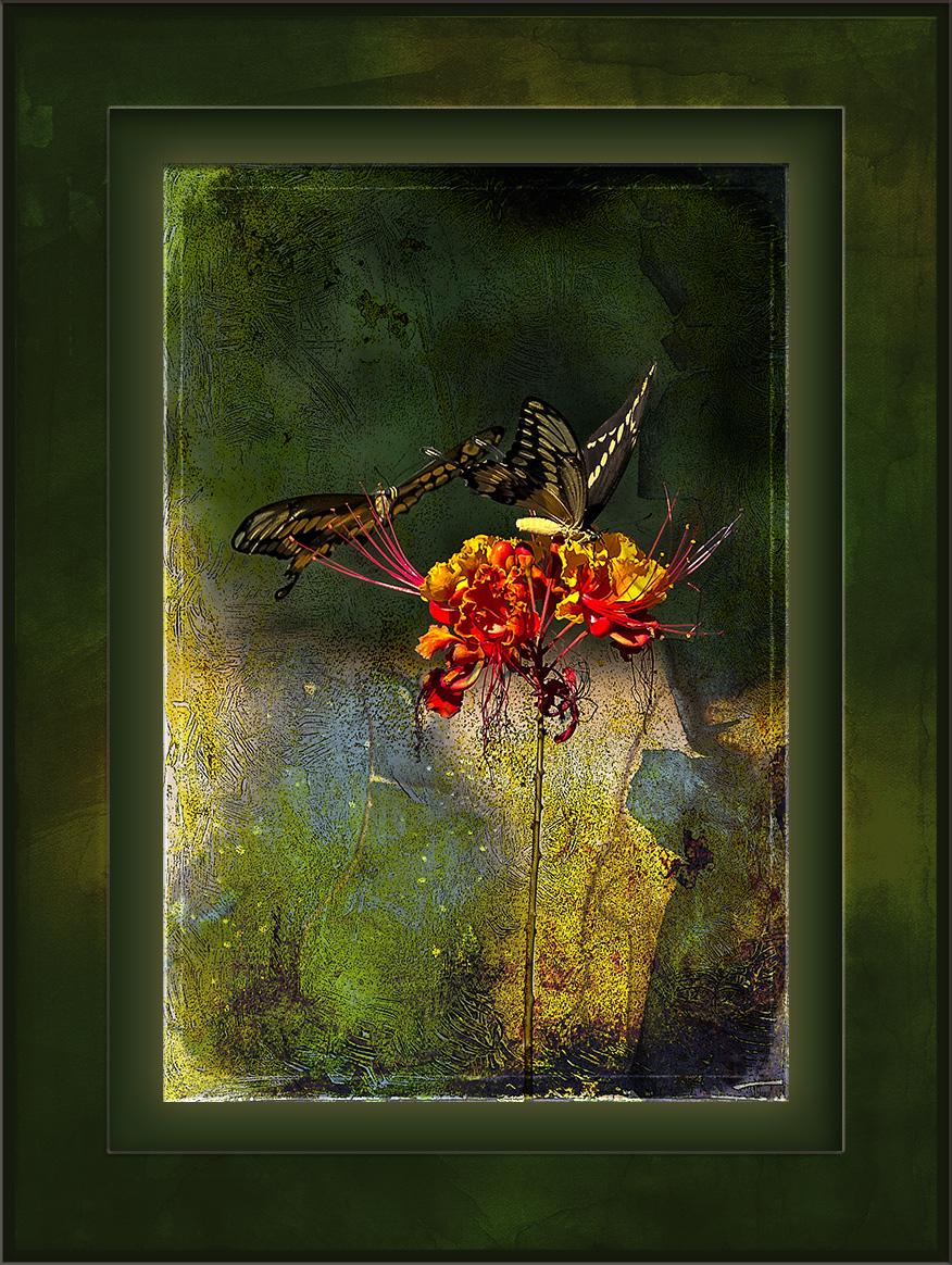 Two-Tailed Swallowtail Butterflies (4 of 6) grunge art blog