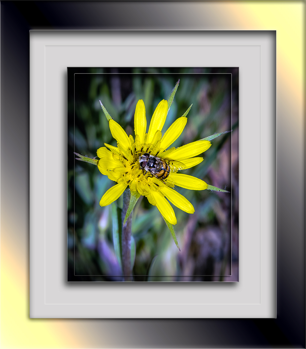 Bee on Silverpuff-1660 blog