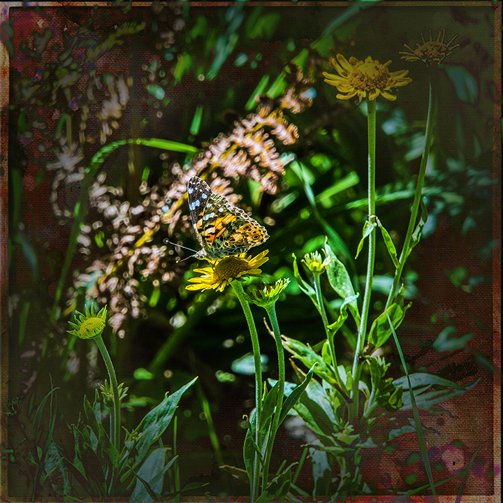 Checkerspot-3219 Art blog