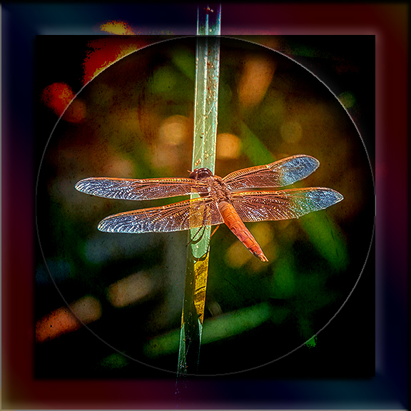 Dragonfly art blog-