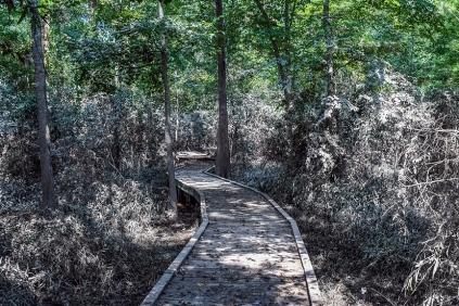 Eastside Park (1 of 1)-16 blog