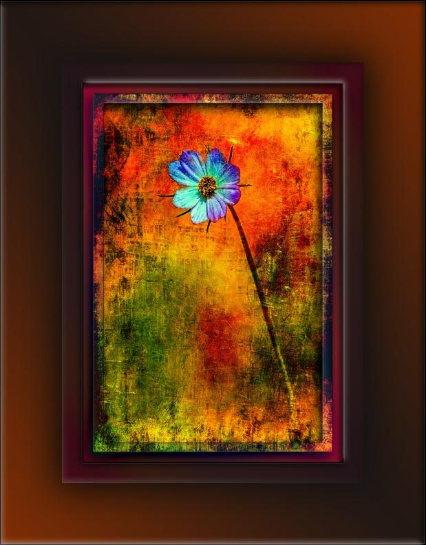 Grunge Wildflower blog