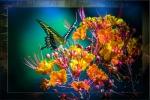 Two-tailed Swallowtail-0447-2 Framedblog