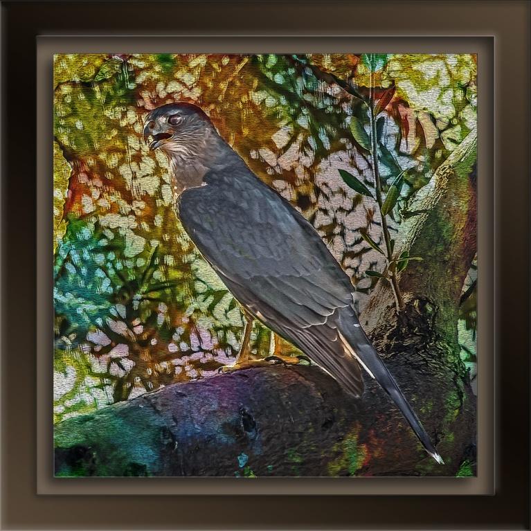 Copper's Hawk-8836-2 art blog