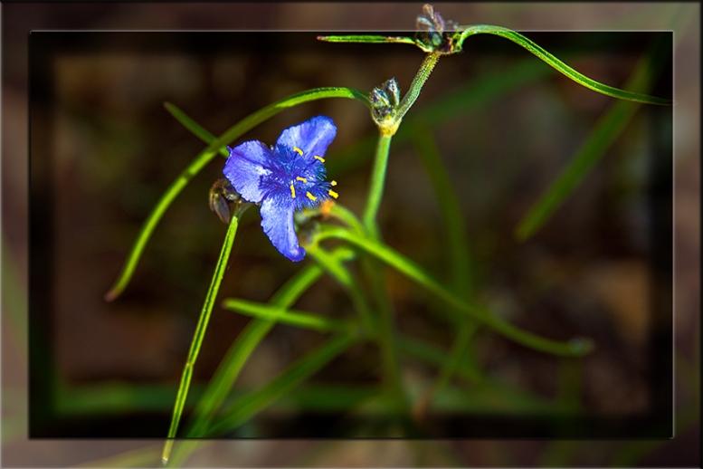 Day Flower-3105 framed blog