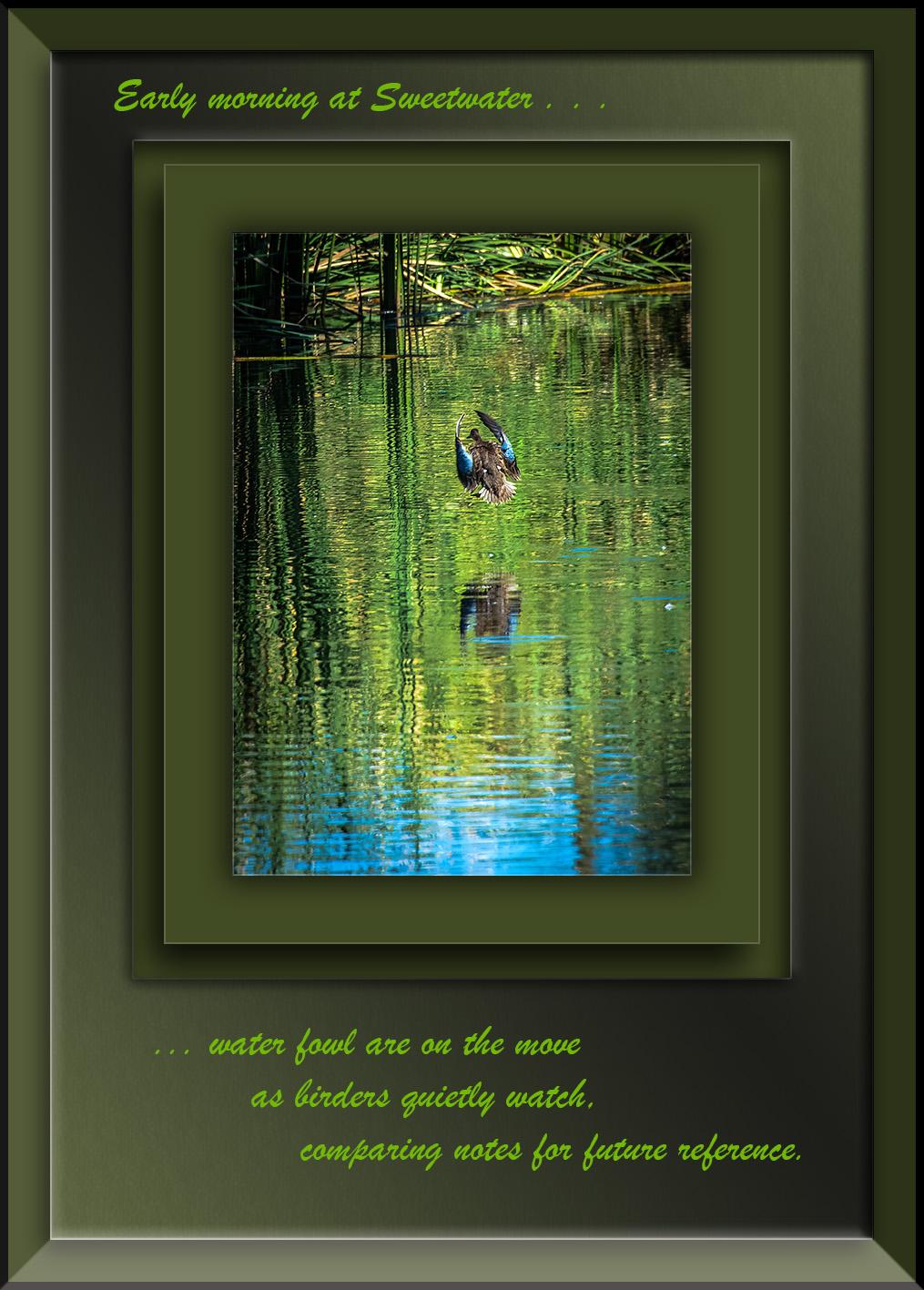 Duck-8042 blog