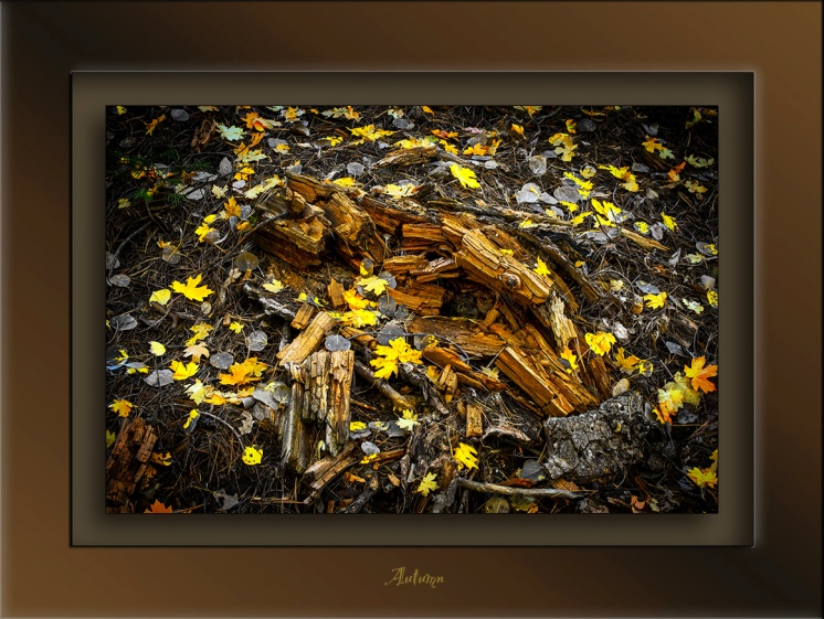 Fall Colors 2014-4253_blog