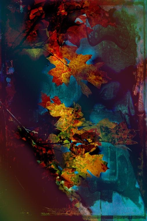 Fall Colors 2016 (1 of 1)-6 art blog.jpg