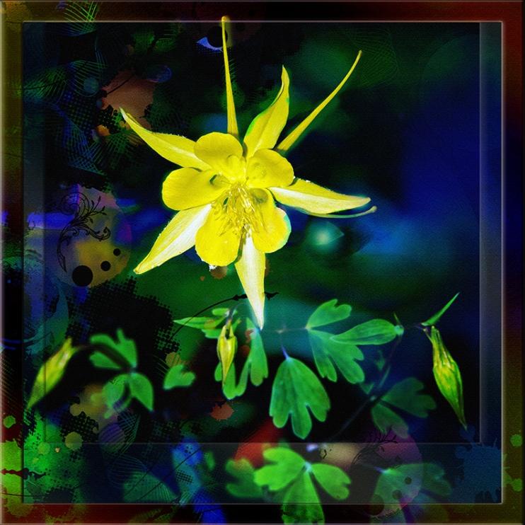 Golden Columbine-3120 art blog