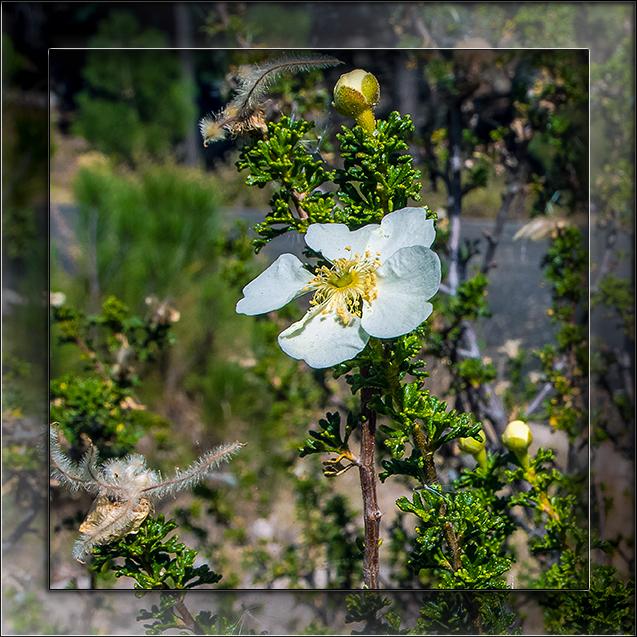 Green Mountain Trail-3286 blog