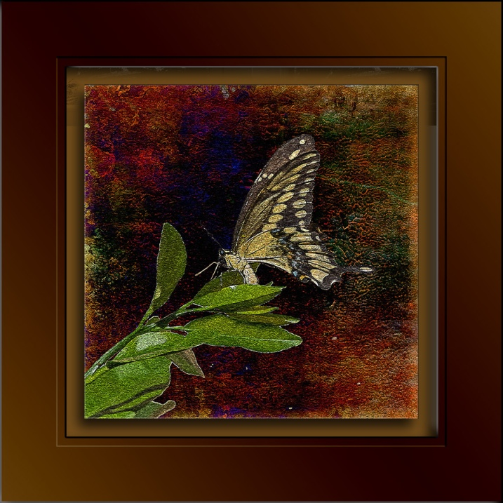 Two-tailed Swallowtail-3254 art blog