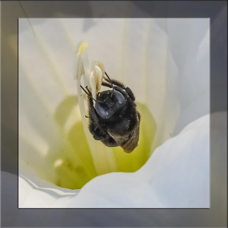 Bee-0724 blog