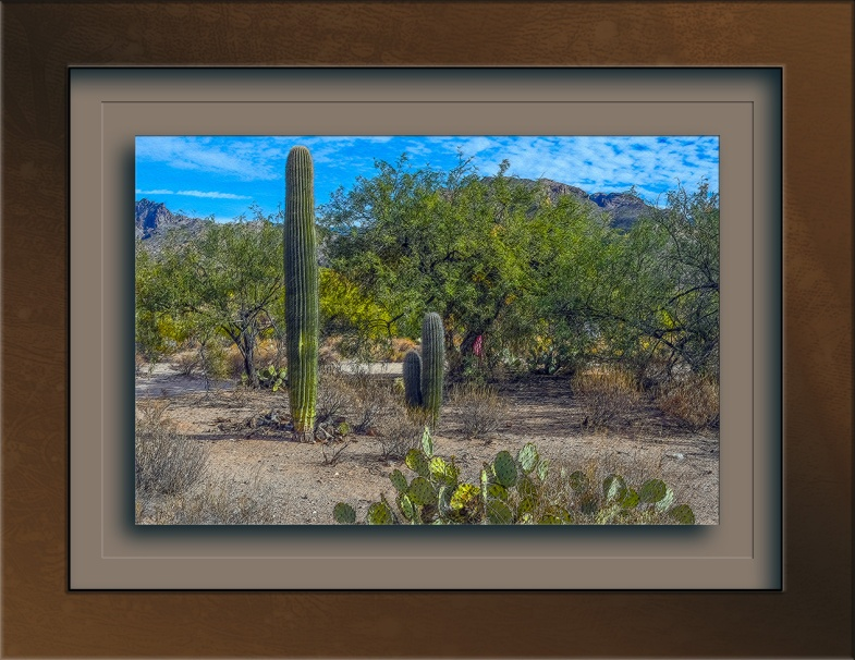 Desert Scene-0674 art blog