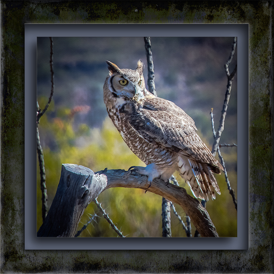 Great Horn Owl-1018 painting blog