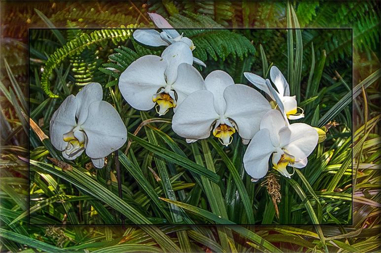 Orchids blog