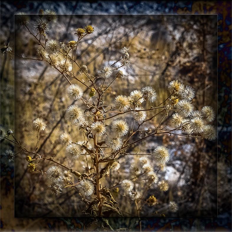 Seeds-0669 blog