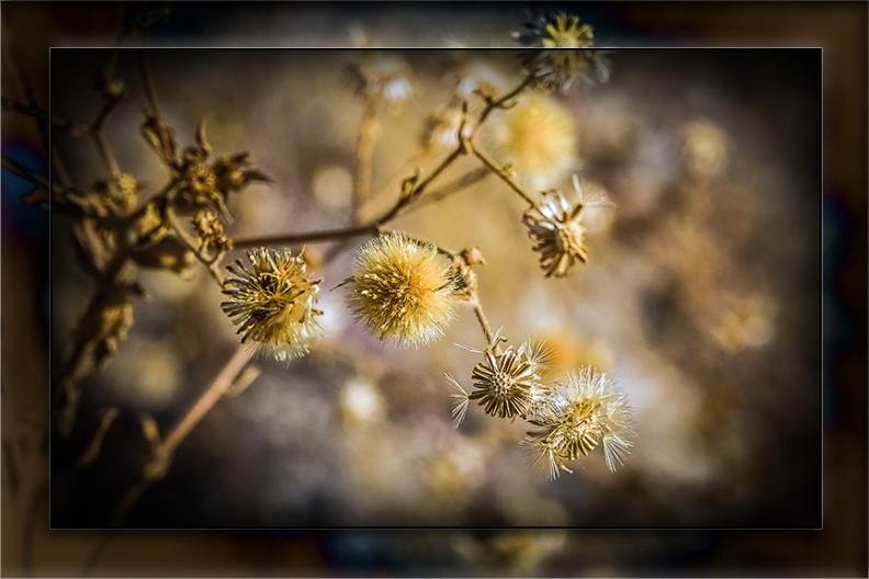 Seeds-0670 blog