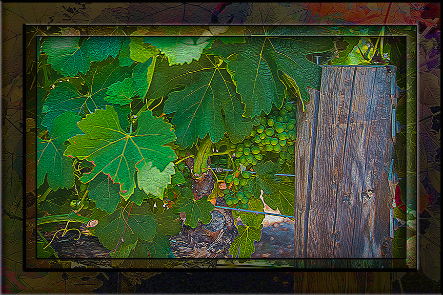Vineyard-2798_art blog