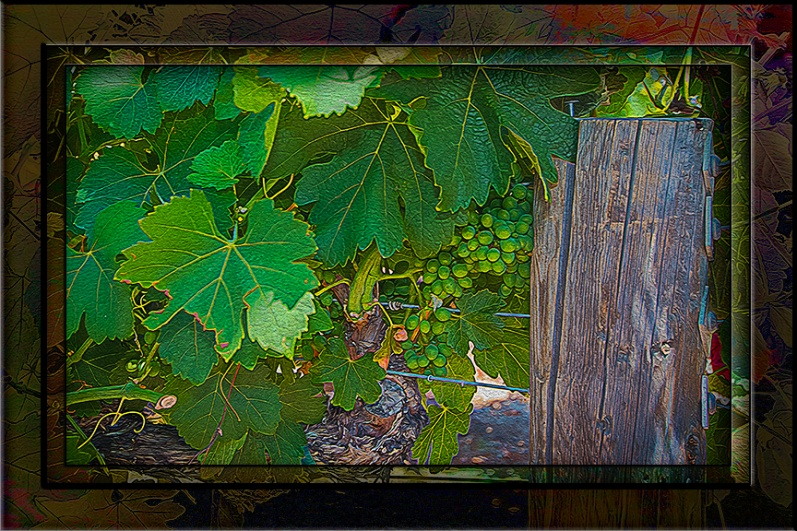 Vineyard-2798_art blog