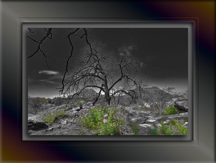 Chiricahua National Monumant