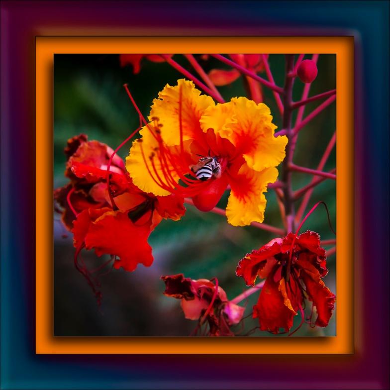 Pollinator blog
