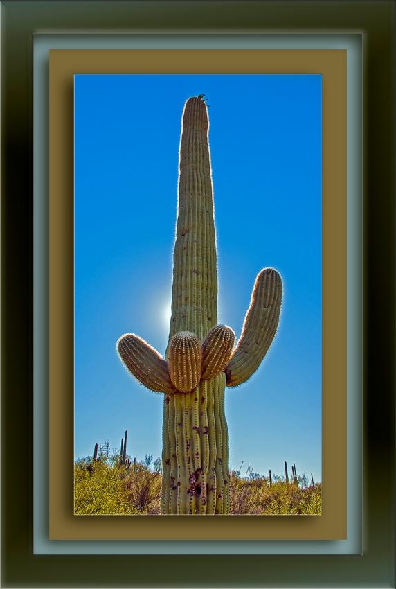 Saguaro Sun blog