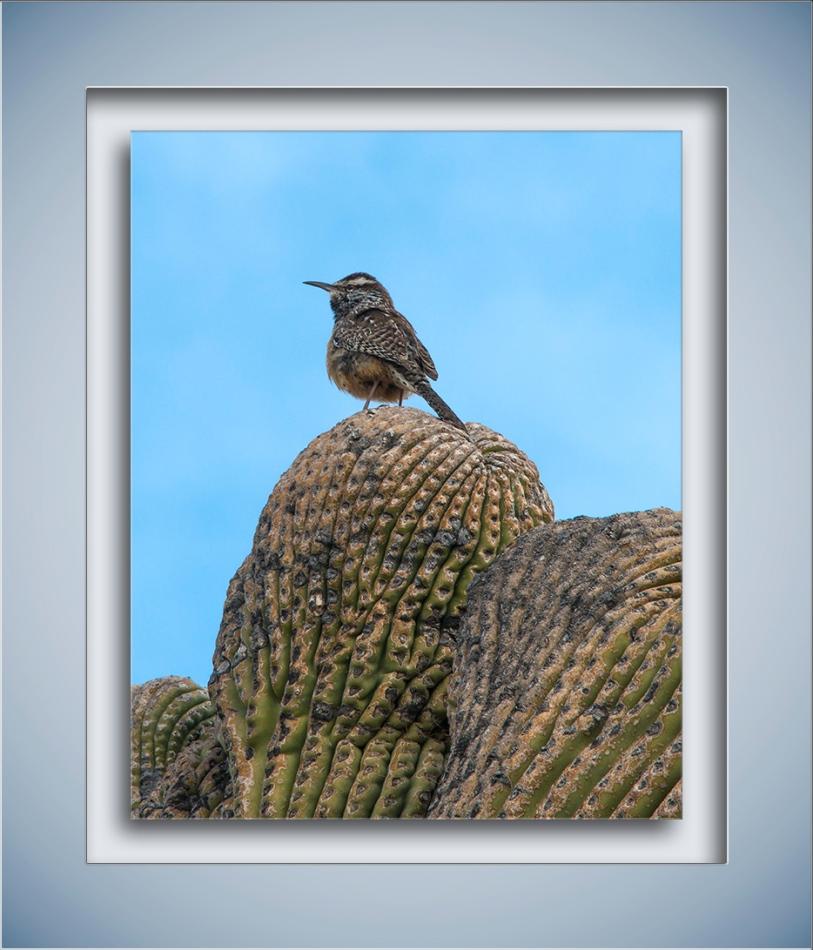 Desert Museum-9822 blog
