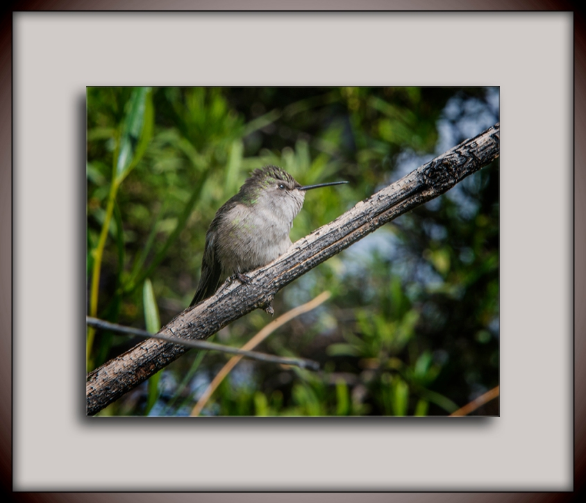 Hummingbird - Youth blog