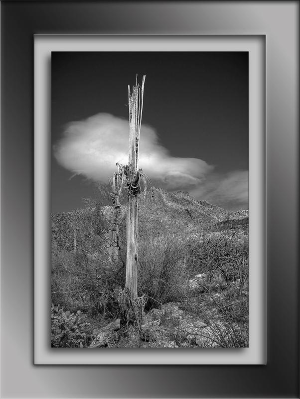 Saguzro Cactus January 27, 2014-9660-2 blog