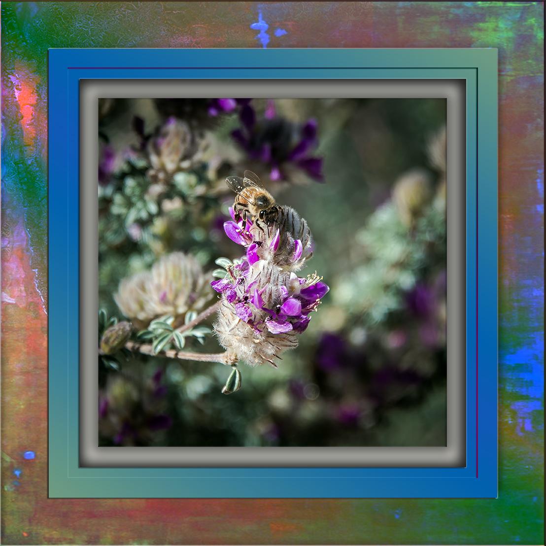 Bee on an Indigo Blossom-3428 blog.jpg