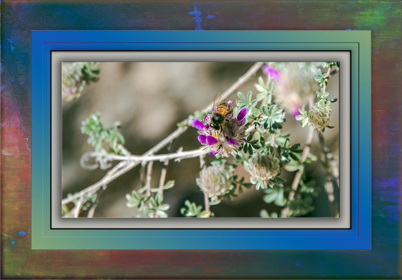 Bee on an Indigo Blossom-3431 blog