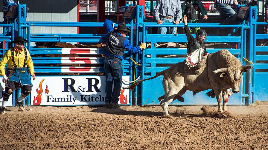 Bull Riding-0337 blog
