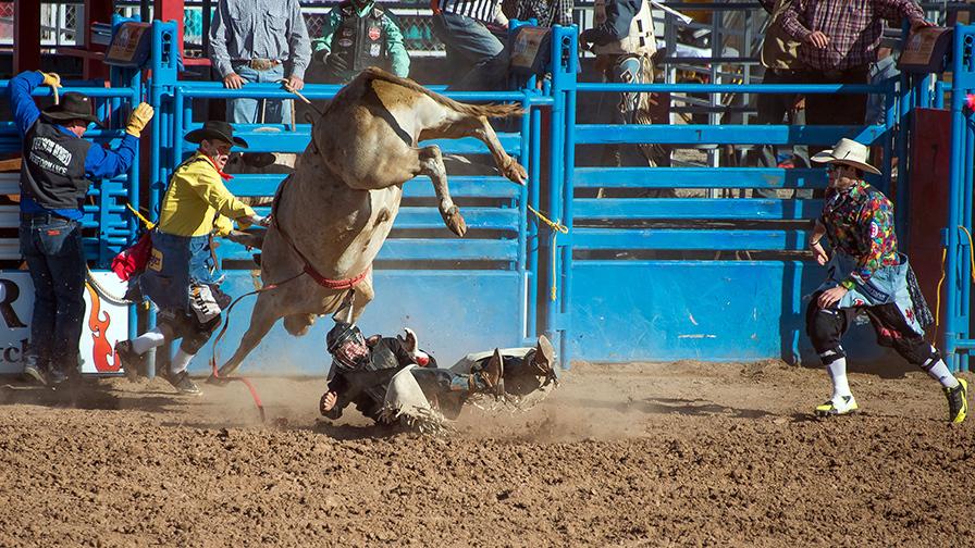 Bull Riding-0339 blog
