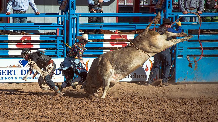 Bull Riding-0342 blog