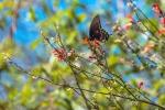 Butterfly-3404 blog