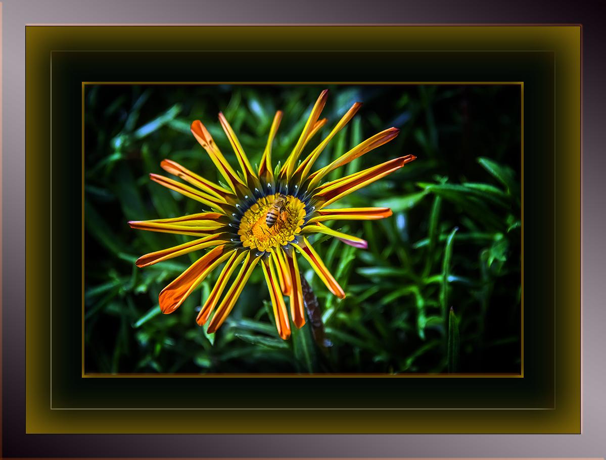 Flower-1057 blog