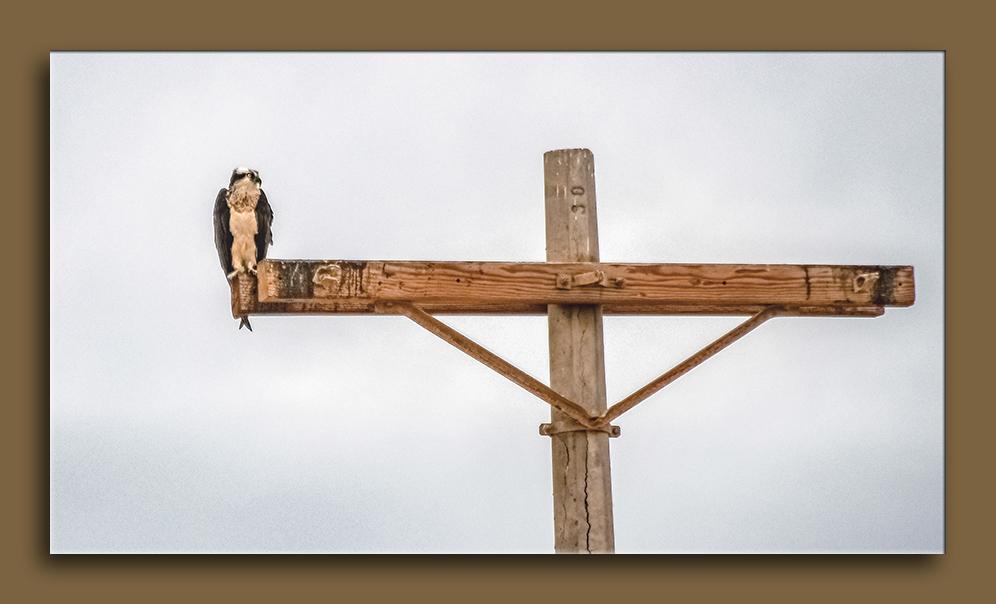 Osprey-1151 blog