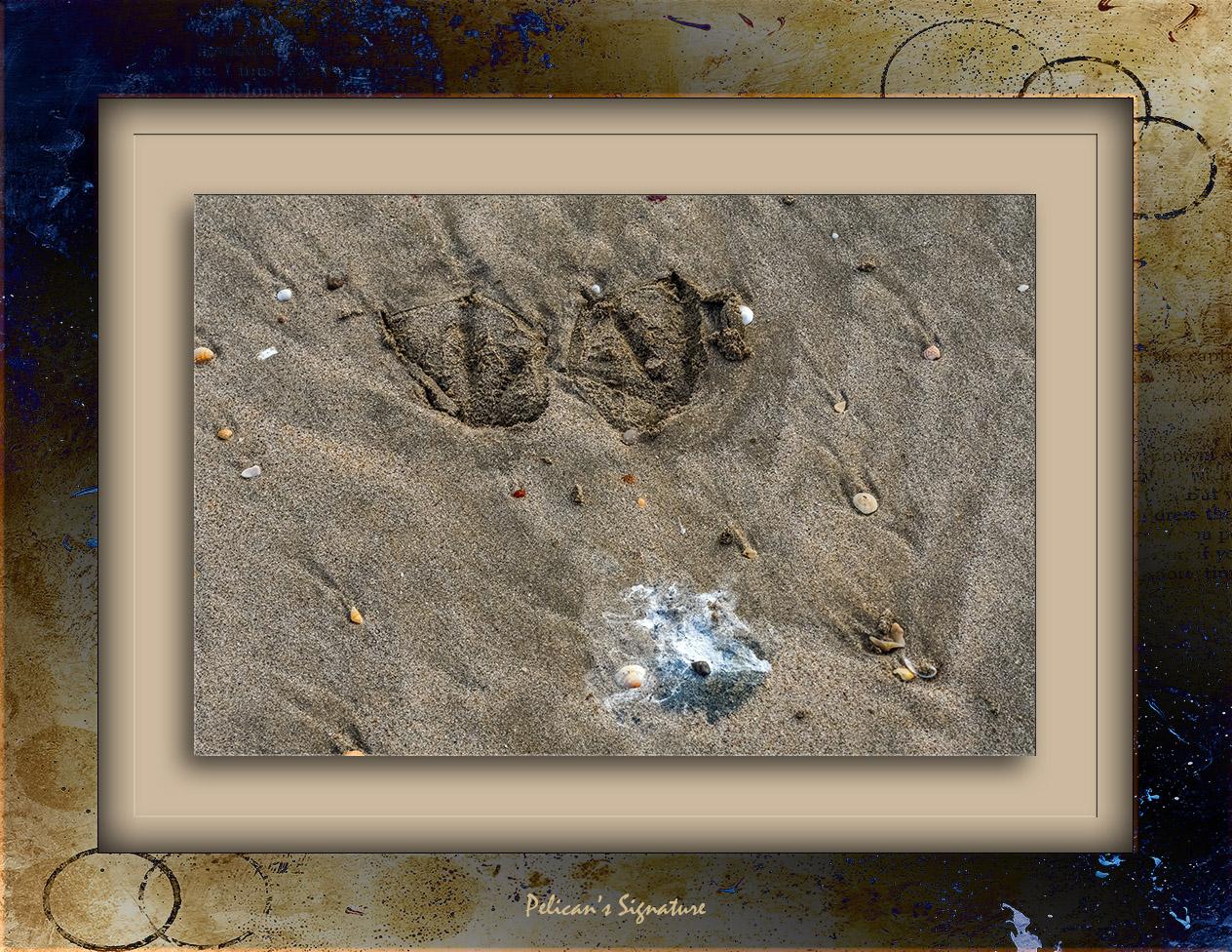 Pelican Signature-0991 blog