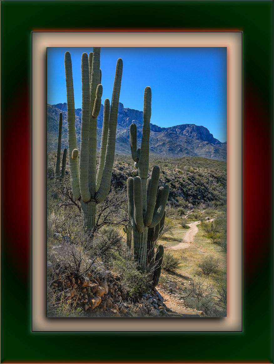 Saguaros Near Trail-1248 blog