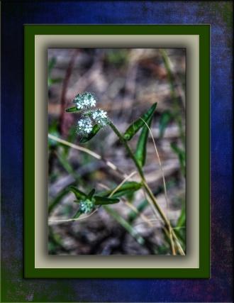 Small Flower DSC_1507 blog