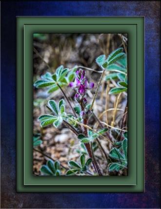 Small Flower DSC_1518 blog