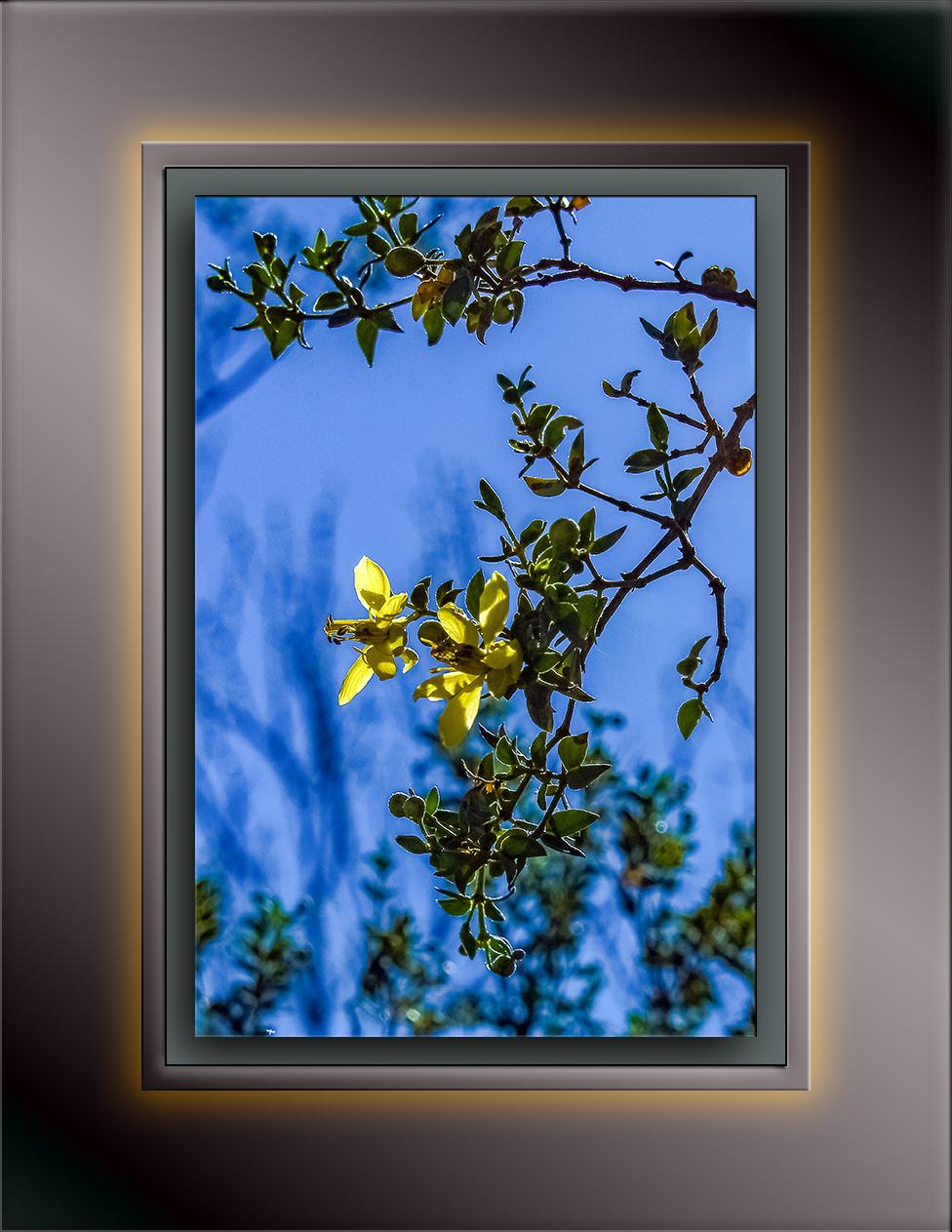 creosote bush-1626 blog