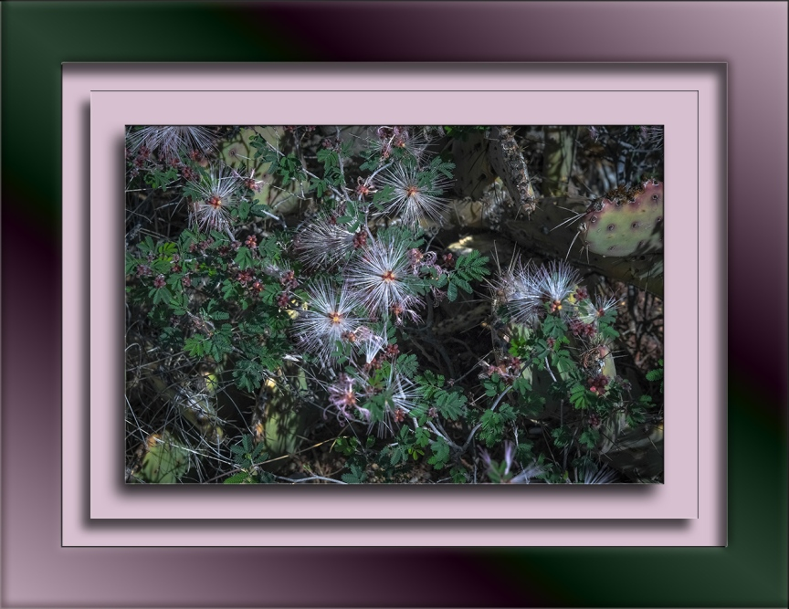 Fairy Duster-1617 blog