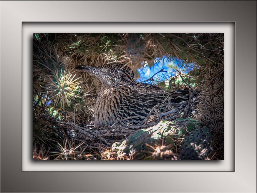 Nesting Roadrunner blog