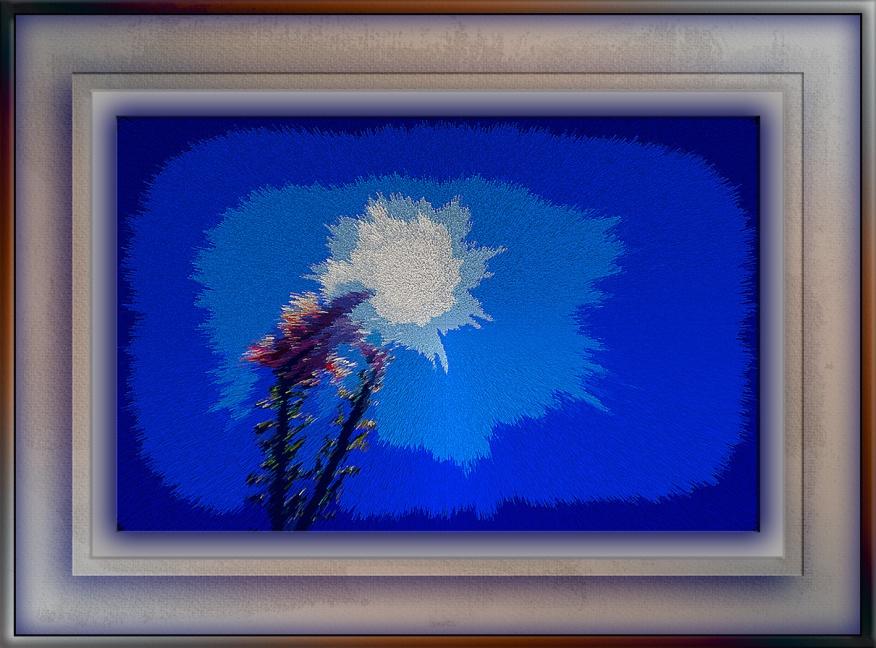 Ocotillo (1 of 1) Art blog